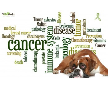 Omtrent hver 3. hund får kræft. Få gode råd til, hvordan kan du forebygge
