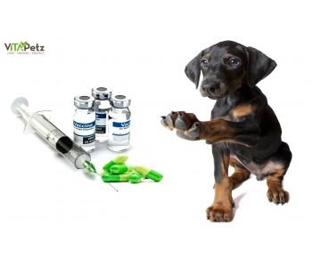 Få lavet en TITER-TEST inden du beslutter om hunden skal vaccineres igen