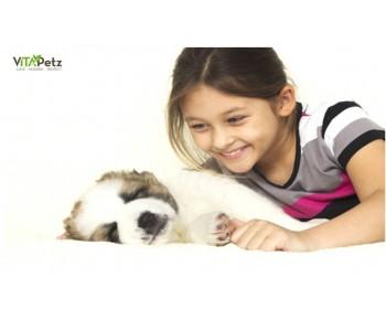 Undersøgelser viser at familiehunden kan forbedre børns livskvalitet